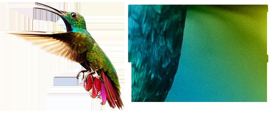 LIVEsurf - сервис для раскрутки и его особенности