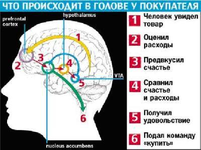 Что из себя представляет нейромаркетинг